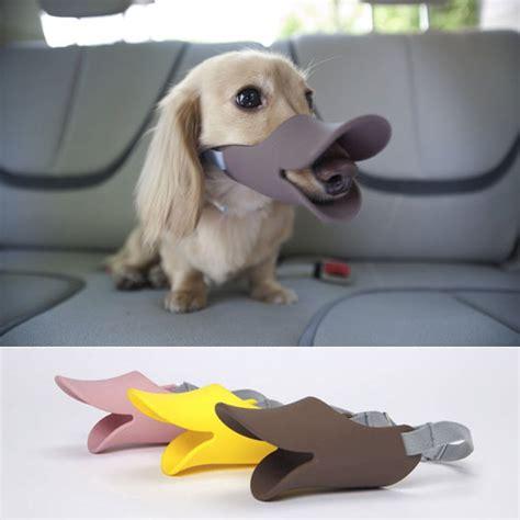 muzzle for small dogs the quack muzzle