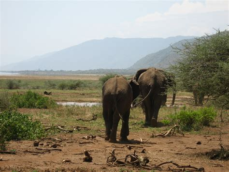 Boneka Grassland By Elie Gallery tansania 183 simba experience