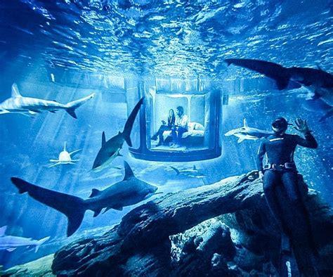 aquarium in bedroom aquarium bed www pixshark com images galleries with a bite