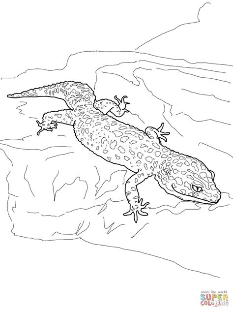 www gecko coloring page coloring pages
