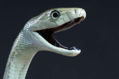 Lepaparazzi News Update Ricci And In Black Snake Moon by Deadly Black Mamba Snake Called Rosie Feared To Be On The