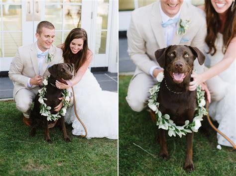 chocolate lab puppy dog ring bearer natalie franke photography chesapeake bay beach club wedding kerry astin