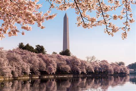 national cherry blossom festival key events national cherry blossom festival 2017 wtop