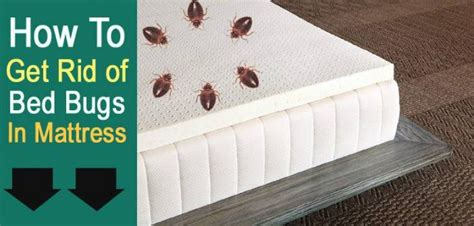diy get rid of bed bugs how to get rid of bed bugs in a mattress