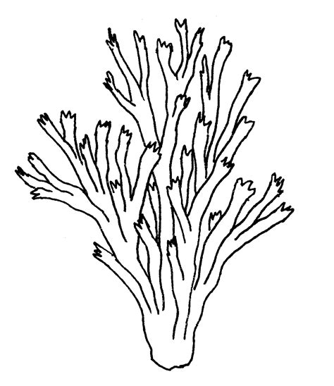 free coloring pages of de coral