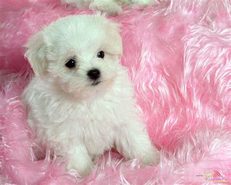 baby puppys baby wallpapers wallpaper cave