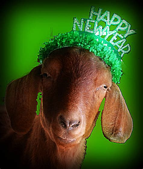 new year animals goat happy new year gg 2013 gardengoatquote a goat s