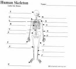 skeletal system worksheet answers abitlikethis
