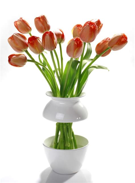 Vase And Flowers by Ways To Spruce Up Your Living Space Daily Trojan