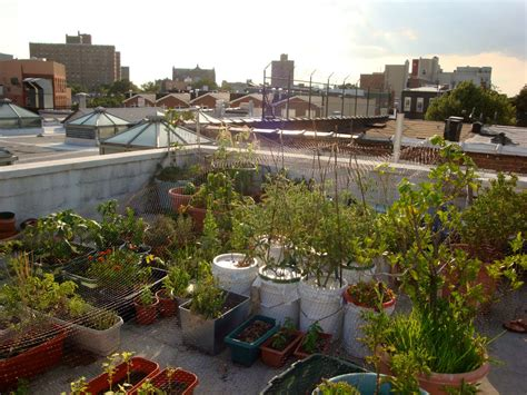 rooftop vegetable garden ideas simple things you can do to save how to build a