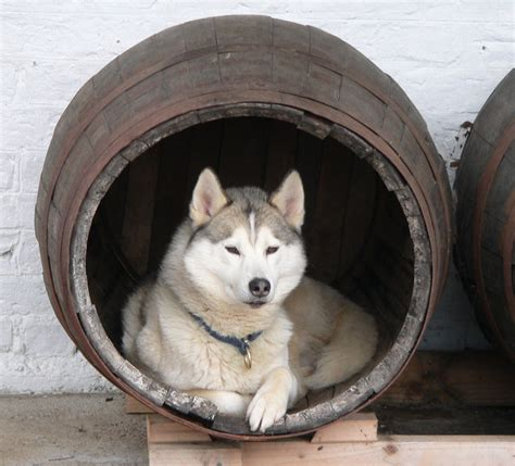 siberian husky dog house siberian husky personal website of two husky owners in the uk archive siberian