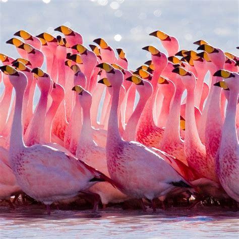 flamingos cute birds wallpaper  desktop