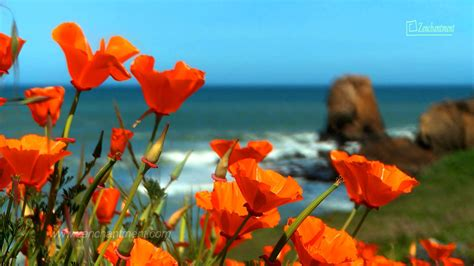 Wave And Flower zen waves flowers california s coast relaxation meditation mindfulness topcools