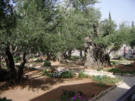 giardino dei getsemani panoramio photo of quot giardino dei getsemani quot
