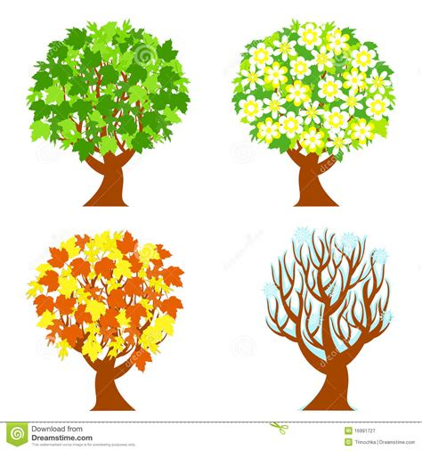 illustration of season trees four seasons trees stock vector illustration of winter 16991727