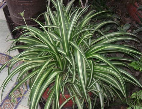 common house plants safe for cats 7 indoor plants that are safe for pets also improve our