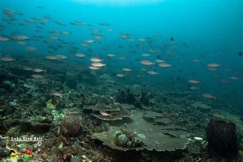 dive gili scuba diving gili tepekong dive from padang bai bali