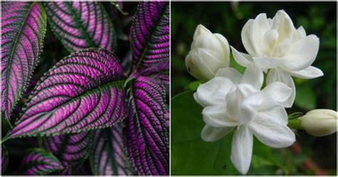imagenes de flores que abren de noche 7 plantas de interior que te har 225 n viajar sin moverte de