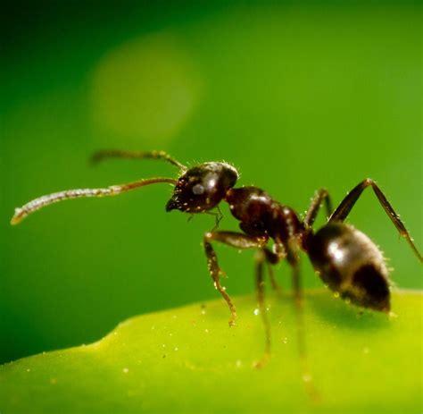 Ameisennester Im Rasen Entfernen 3543 by Wie Bek 228 Mpfe Ich Ameisen Im Rasen Ameisen Spielen