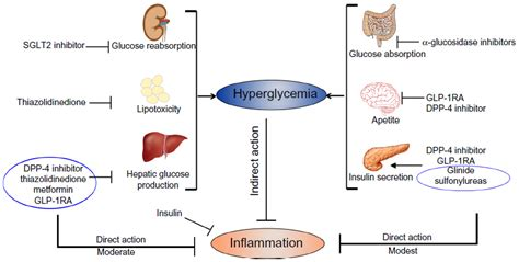 Tzds Also Search For Text Hypoglycemic Agents And Potential Anti Inflammatory Activity Jir