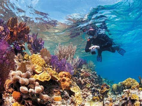 Best 25 Scuba Diving Magazine Ideas On Pinterest Dive Flower Gardens Scuba