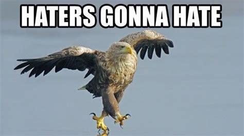 Funny Eagles Memes - positive eagles memes murica memes pinterest eagles