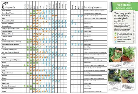 vegetable garden chart vegetable growing chart i like this at a glance chart