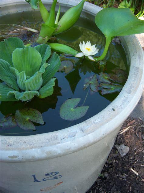 container water garden plants a water garden in an hour garden drama