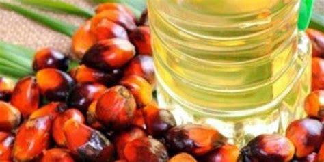Minyak Kelapa Di Pasaran sawit indonesia dominasi pasar dunia faktor ramah lingkungan dipertanyakan
