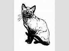 Siamese Cat Illustration Clipart Free Stock Photo - Public ... Free Clipart Of Siamese Cats