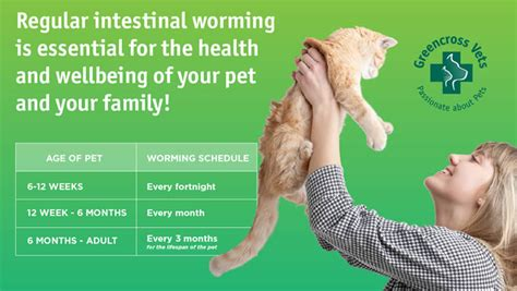 puppy worming schedule intestinal worms articles of interest common conditions pet care information from