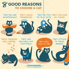 8 Reasons Cats Make Great Companions by 1000 Images About Cat Treats On Cat Treats