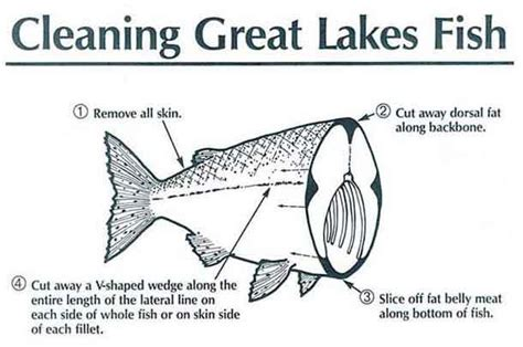 Great Lakes Executive Mba Cut by Swimming Upstream Toxins In Great Lakes Fish Part 7