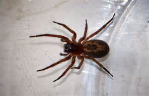 Garden Spider Uk Poisonous 10 Common Spiders You Re Likely To Find In A Home Bt