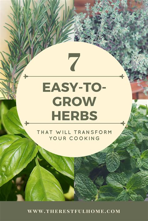 7 easy to grow herbs that will transform your cooking the restful home
