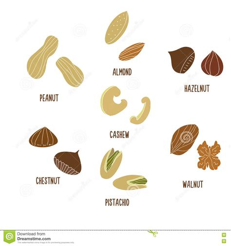 how to make doodle nuts cashew illustrations vector stock images 476