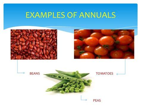 chmsc lab school science project classification of plants