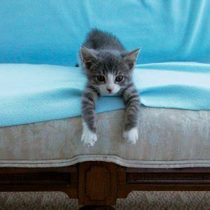 How To Keep Cat Sofa by Preventing Cats From Scratching Furniture Thriftyfun