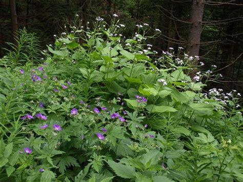 Garten Einheimische Pflanzen by Einheimische Pflanzen Wiedmaier Garten