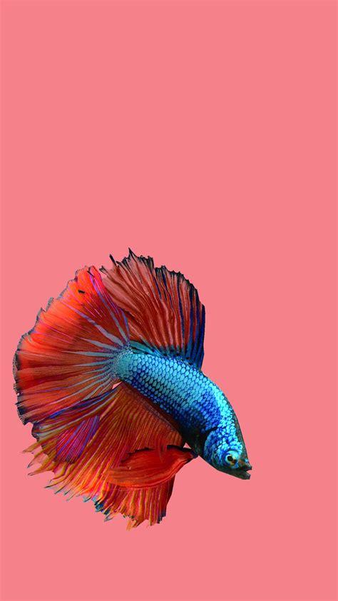betta fish    android apk