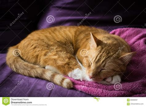 cats on the couch adorable sleeping ginger cat on the couch stock photo