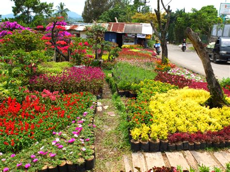 penjual bibit  tanaman hias villa miranti kota