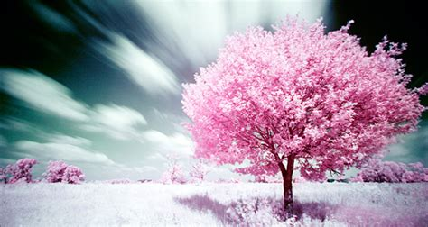 sakula tree creative photo  design inspiration
