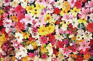 colorful flower crossword lots of colorful flowers jigsaw puzzle in flowers puzzles
