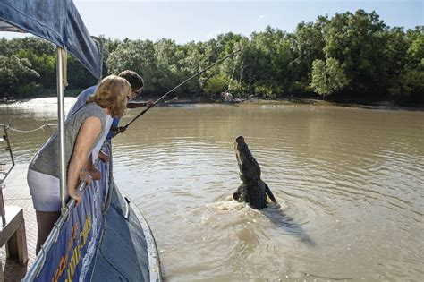 crocodile boat tours darwin jumping crocodile cruise kakadu tours travel