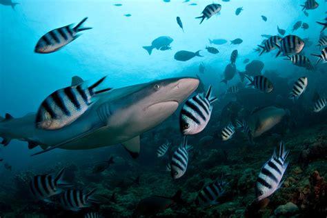 dive fiji fiji diving holidays travel co