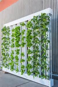 Indoor Hydroponic Wall Garden Choosing The Best Plants For Indoor Hydroponic Gardens