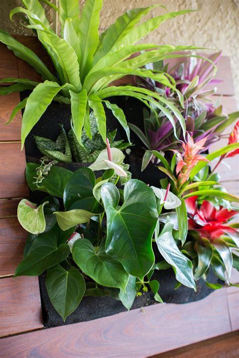 Vertical Gardening Plants Singing Gardens San Diego S Landscape And Garden Designer