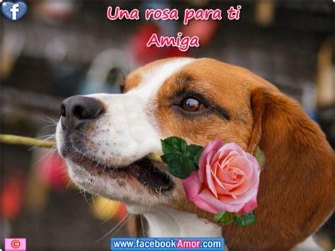 top rosas para una amiga especial wallpapers imagenes bonitas para una amiga especial frases de amor