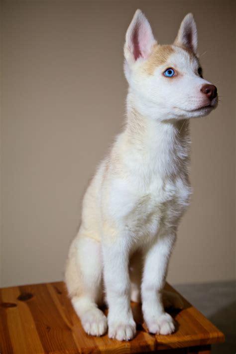 albino animals  tumblr